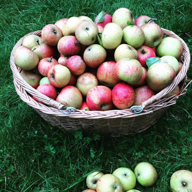 Todays apple picking hauland theres still more left on thehellip